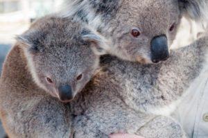 Flüge nach Cairns: Abtauchen in Australiens schönste Natur