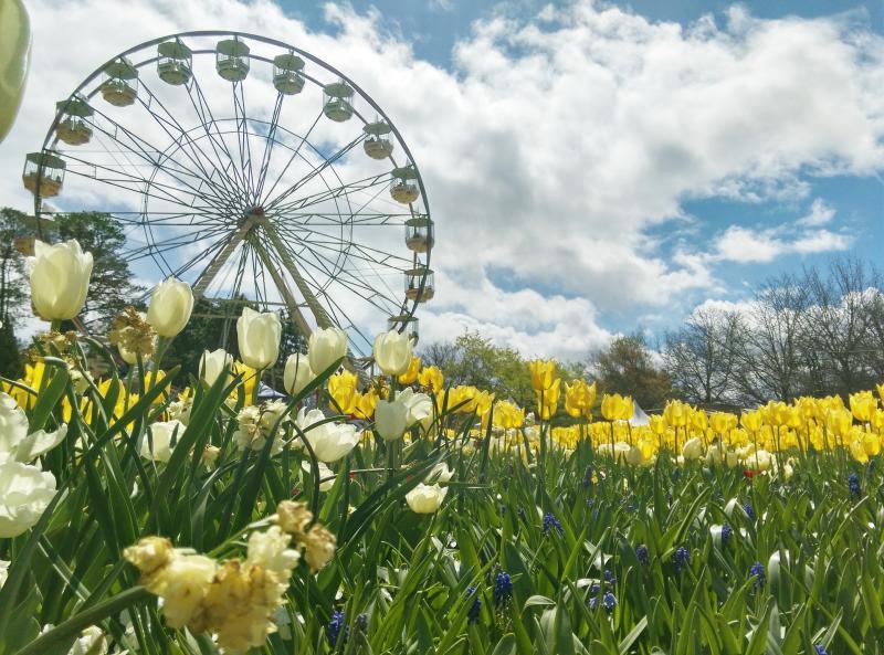 Canberra: Entdecken Sie die Hauptstadt Australiens!